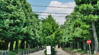 京都大学藤井聡教授が大阪都構想に反対する本当の訳?